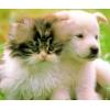 Купить :  Ветеринария.  Биопрепараты для здоровья всех животны