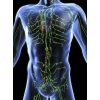 Злокачественная лимфома